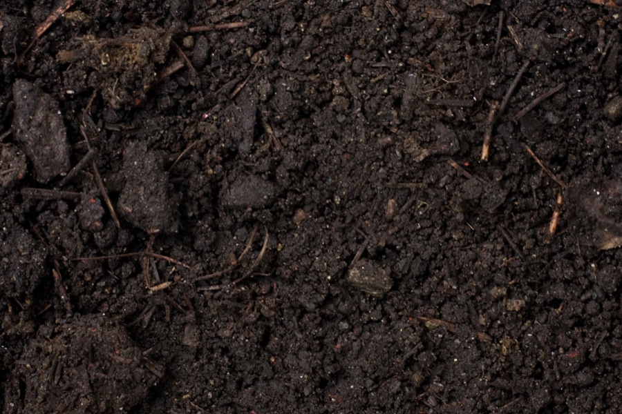 2015: International Year of The Soils